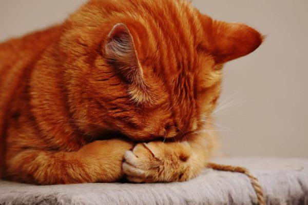 kattevideo eller katte video - få styr på de sammensatte ord